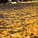 Autumn Leaves(枯葉) – シャンソンとしても有名。世界で愛されるスタンダード